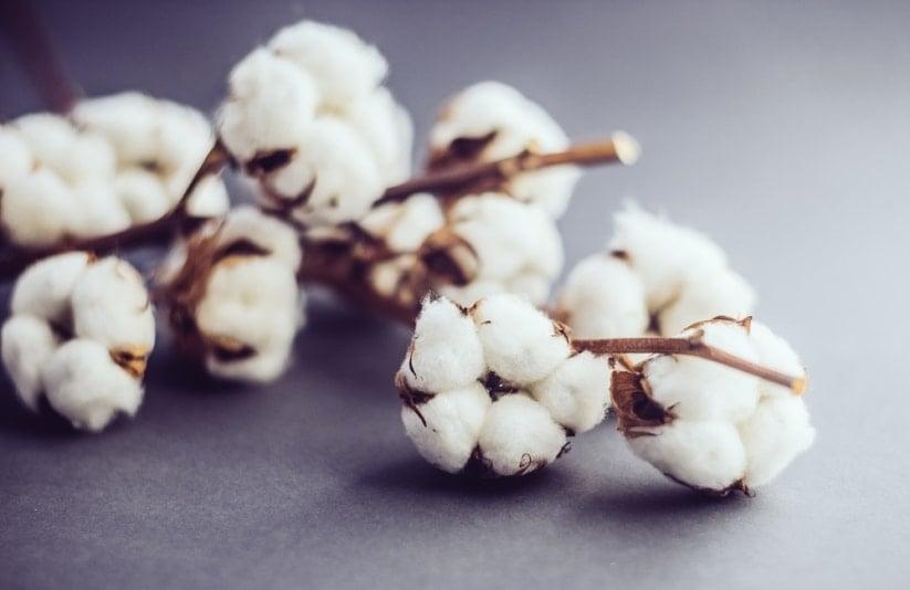 cnaas-assurance-indicielle-coton-sodifitex