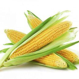 agriculture-maïs-assurance-récolte